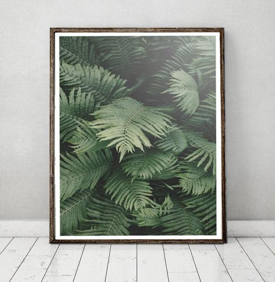 plakat-liście-paproci-dżungla-natura