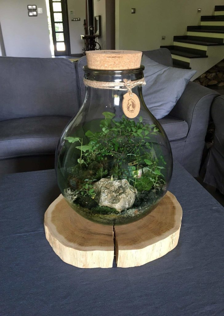jar of forest