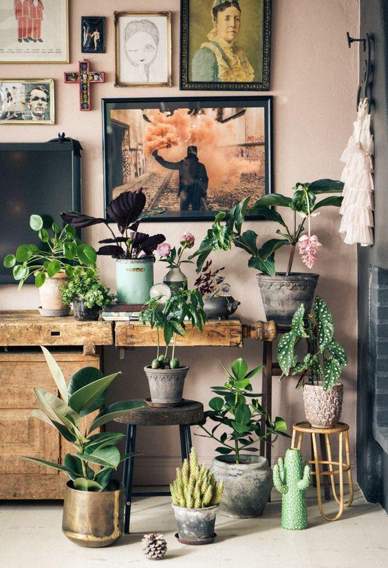 roślinne kompozycje