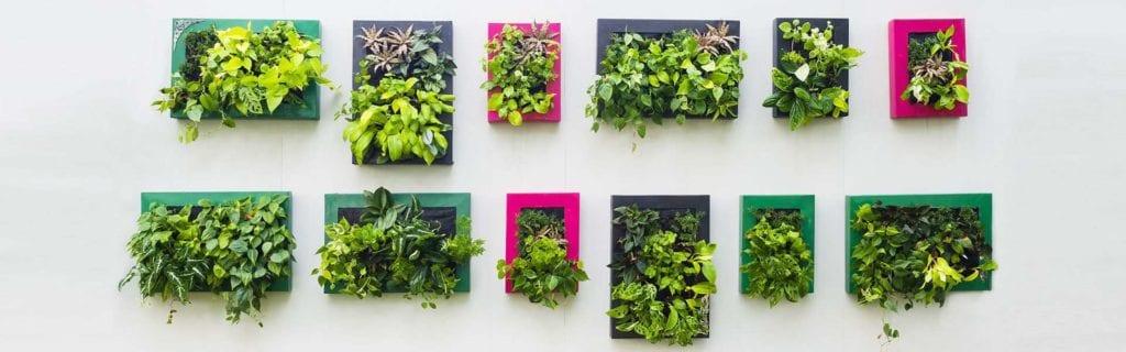 zielone ściany