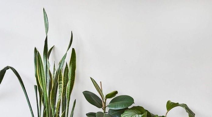 Rośliny doniczkowe dekoracyjne worki