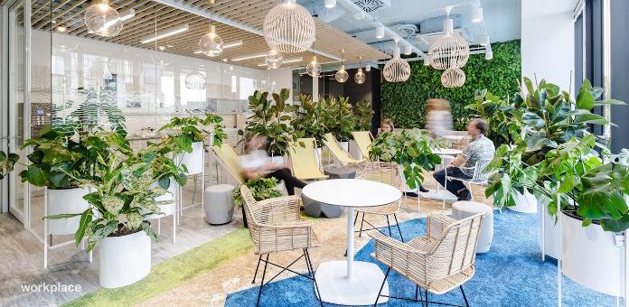 OKK design rośliny hall restauracja kresło plecione niebieski dywan