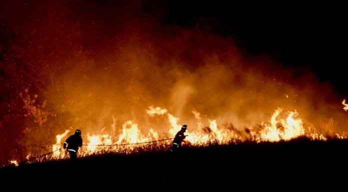 pożary-w-australii-architekci-chcą-pomóc