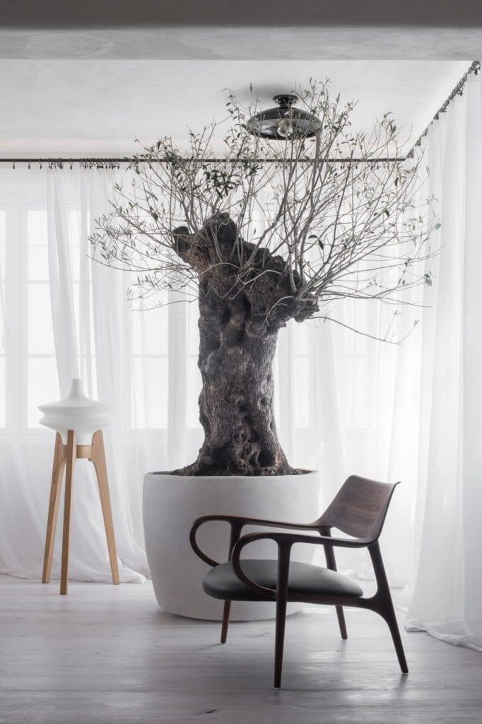 drzewo-oliwa-w-domu-inspiracje-przytulne-wnętrza