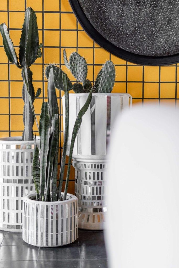 kaktusy-żółta-ściana-płytki