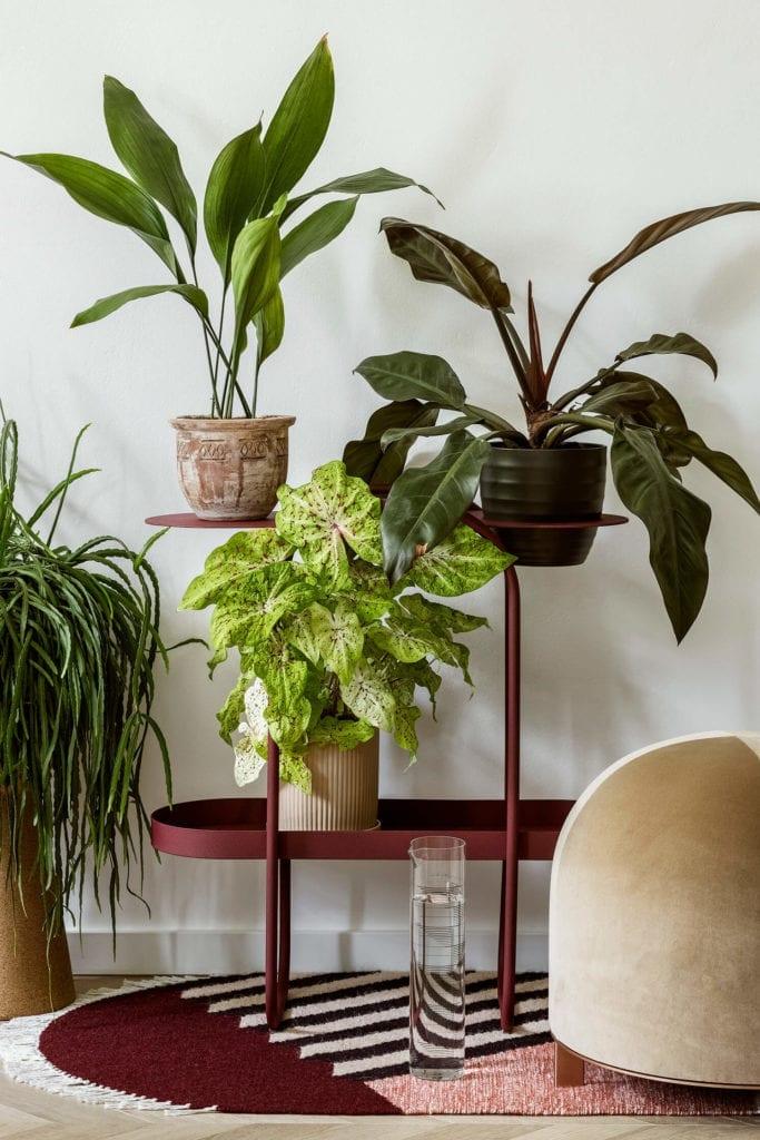 stolik-lampa-komoda-regał-salon-polskie-wnętrza-rośliny-kwiaty-polskie-marki